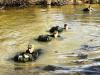 Armádní nováčci mají za sebou již 4týdny základní přípravy
